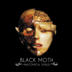 Black Moth - Anatomical...